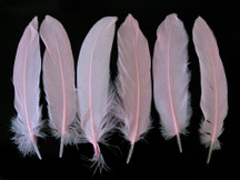 1 Pack - Baby Pink Goose Satinettes Loose Feathers 0.3 Oz.