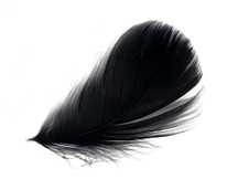 "1 Pack - 2-3"" Black Goose Coquille Loose Feathers - 0.35 Oz."