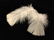 1 Pack - Ivory Dyed Turkey T-Base triangle Body Plumage Feathers 0.50 Oz.