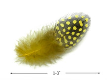 1 Pack - Yellow Guinea Hen Polka Dot Plumage Feathers 0.10 Oz.