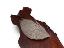 1 Pack - Natural Mallard Duck Flank Plumage Feathers 0.10 Oz.