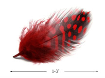 1 Pack - Red Guinea Hen Polka Dot Plumage Feathers 0.10 Oz.