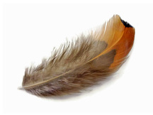 1 Pack - Gold Ringneck Pheasant Plumage Loose Feathers 0.10 Oz.