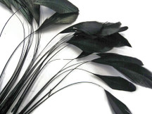 1 Dozen - Black Stripped Rooster Coque Tail Feathers