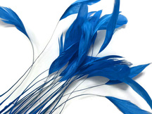 1 Dozen - Turquoise Blue Stripped Rooster Coque Tail Feathers