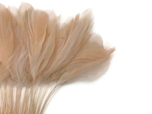 1 Dozen - Champagne Stripped Rooster Coque Tail Feathers