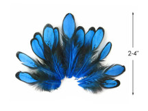 1 Dozen - Turquoise Blue Whiting Farms Laced Hen Saddle Feathers