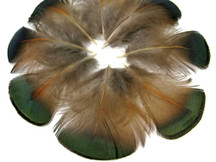 1 Pack - Iridescent Green Bronze Golden Pheasant Plumage Feathers 0.10 Oz