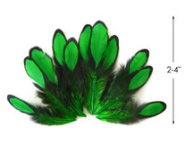 1 Dozen - Kelly Green Whiting Farms Laced Hen Saddle Feathers