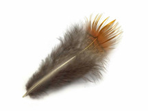 1 Pack - Natural Yellow Golden Pheasant Plumage Loose Feather 0.10 Oz.
