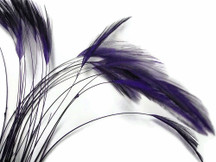 1 Dozen - Purple Stripped Rooster Hackle Feather