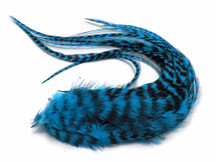 6 Pieces - Turquoise Blue Grizzly Thick Long Rooster Hair Extension Feathers