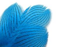1 Dozen - Blue Silver Pheasant Feathers