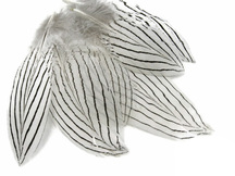 1 Pack - Natural Silver Pheasant Plumage Feathers 0.10 Oz.