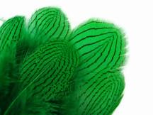 1 Dozen - Green Silver Pheasant Feathers