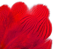 1 Dozen - Red Silver Pheasant Plumage Feathers