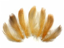 1 Pack - Gold Mallard Duck Flank Plumage Feathers 0.10 Oz.