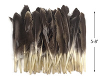 1 Pack - Natural Brown Duck Primary Wing Pointer Feathers 0.50 Oz.