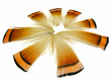 1 Dozen - Natural Orange Golden Pheasant Tippet Feather