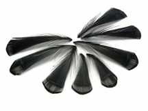 1 Dozen - Black Lady Amherst Pheasant Tippet Feathers