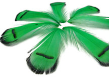 1 Dozen - Kelly Green Lady Amherst Pheasant Tippet Feathers