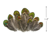 10 Pieces - Iridescent Green Gold Peacock Plumage Loose Feather