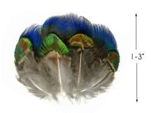 20 Pieces - Mix Iridescent Blue, Green & Gold Peacock Plumage Loose Feathers