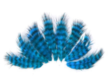 1 Dozen - Turquoise Blue Grizzly Mini Rooster Chickabou Fluff Whiting Hair Feathers
