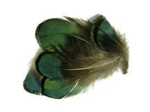 1 Pack - Iridescent Green Bronze Lady Amherst Pheasant Plumage Feathers 0.10 Oz.
