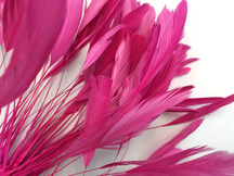 1 Dozen - Hot Pink Stripped Rooster Coque Tail Feathers