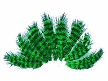 1 Dozen - Kelly Green Grizzly Rooster Chickabou Fluff Mini Feathers