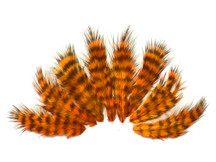 1 Dozen - Orange Grizzly Rooster Chickabou Fluff Feathers