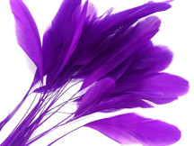 1 Dozen - Purple Stripped Rooster Coque Tail Feathers