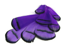 1 Dozen - Purple Lady Amherst Pheasant Tippet Feathers