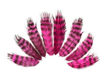 1 Dozen - Hot Pink Grizzly Rooster Chickabou Fluff Feathers