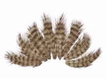 1 Dozen - Tan Grizzly Mini Rooster Chickabou Fluff Whiting Hair Feathers