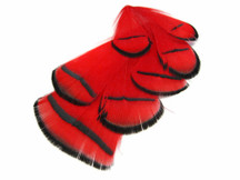 1 Dozen - Red Lady Amherst Pheasant Tippet Feathers