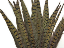 "10 Pieces - 6-8"" Natural Ringneck Pheasant Tail Feathers"