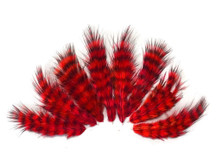 1 Dozen - Red Grizzly Mini Rooster Chickabou Fluff Whiting Hair Feathers