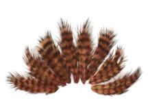 1 Dozen - Brown Grizzly Rooster Chickabou Fluff Mini Feathers