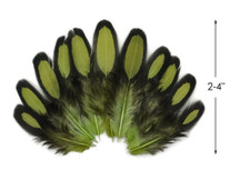 1 Dozen - Olive Green Whiting Farms Laced Hen Saddle Feathers