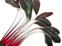 1 Dozen - Red Bronze Stripped Rooster Coque Tail Feathers