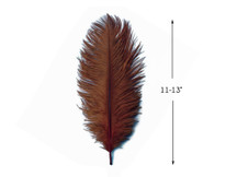 "10 Pieces - 11-13"" Brown Bleached & Dyed Ostrich Drabs Body Feathers"