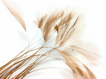 1 Dozen - Beige Stripped Rooster Neck Hackle Feather