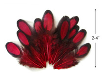 1 Dozen - Claret Whiting Farms Laced Hen Saddle Feathers