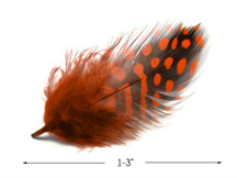 1 Pack - Orange Guinea Hen Polka Dot Plumage Feathers 0.10 Oz.