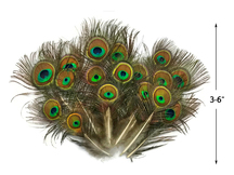 "10 Pieces - Mini Natural Peacock Tail Body Feathers 3-6"" Long"