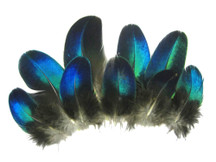 10 Pieces - Electric Blue Iridescent Peacock Round Plumage Feathers