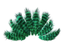 1 Dozen - Peacock Green Grizzly Mini Rooster Chickabou Fluff Whiting Hair Feathers