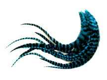 1 Dozen - Medium Turquoise Blue Grizzly Rooster Saddle Whiting Hair Extension Feathers